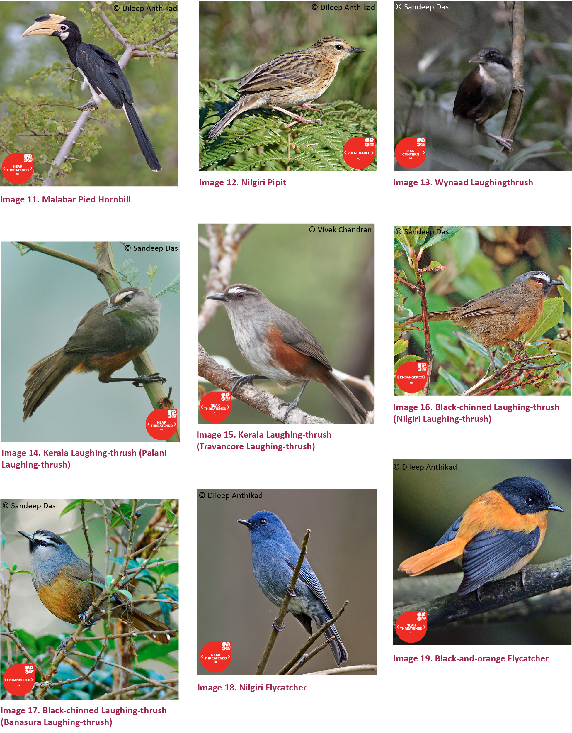 View Of A Checklist Of Birds Of Kerala India Journal Of Threatened Taxa
