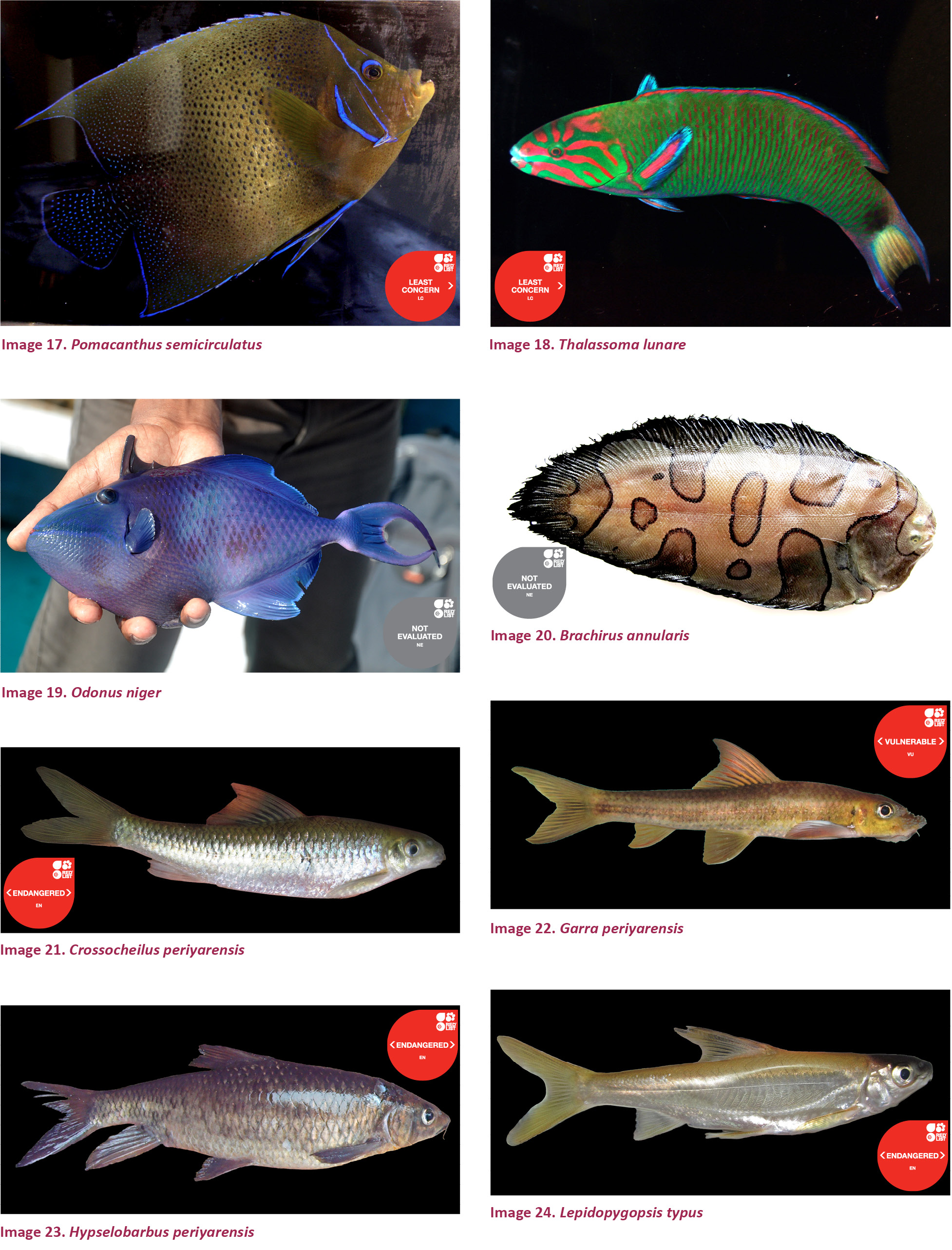 View Of A Checklist Of Fishes Of Kerala India Journal Of