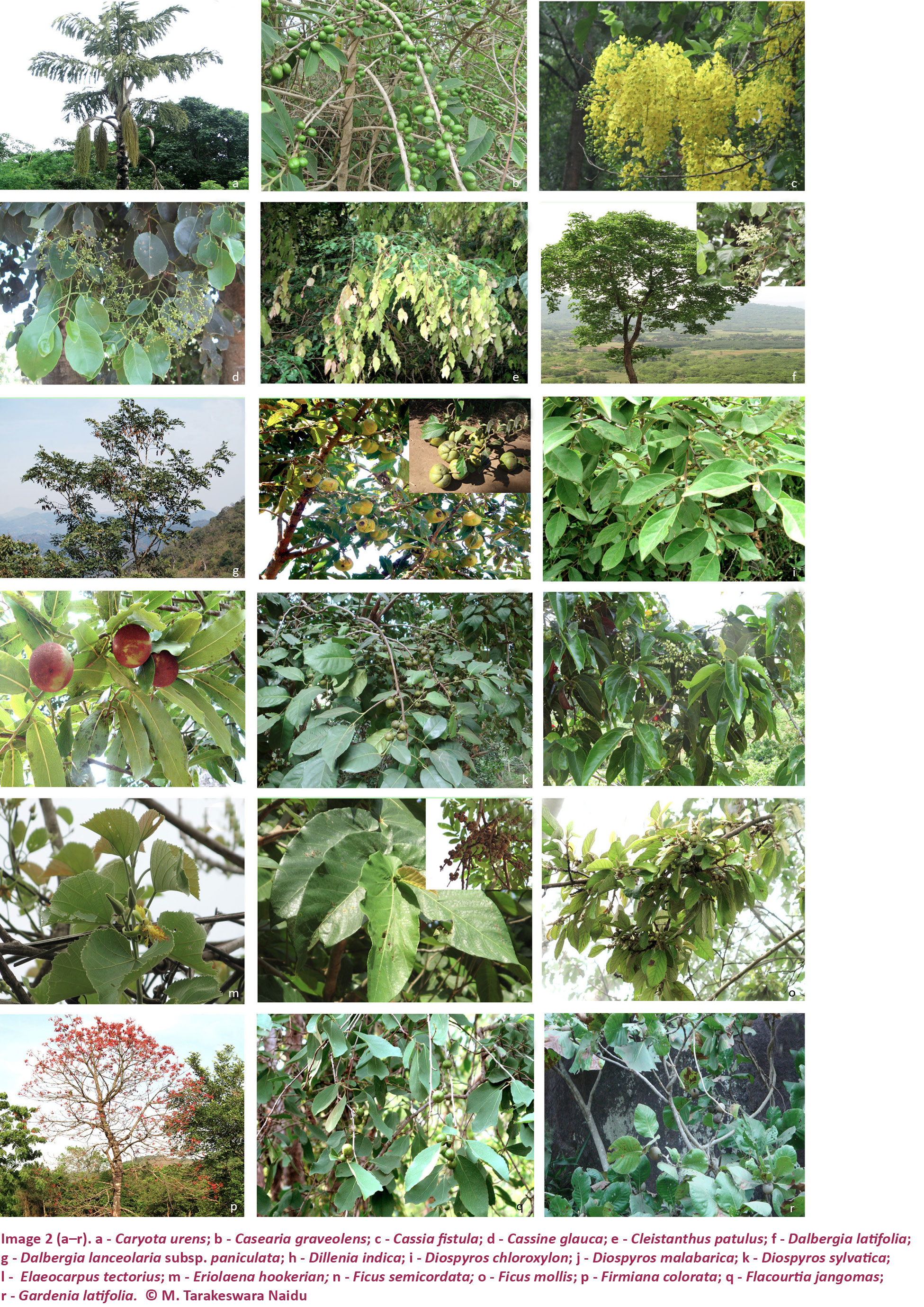 View of Tree species diversity in the Eastern Ghats of northern