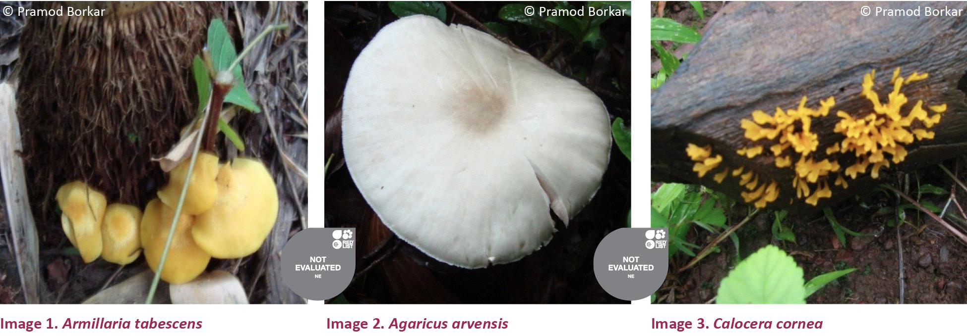 View of Mushroom diversity of Konkan region of Maharashtra, India