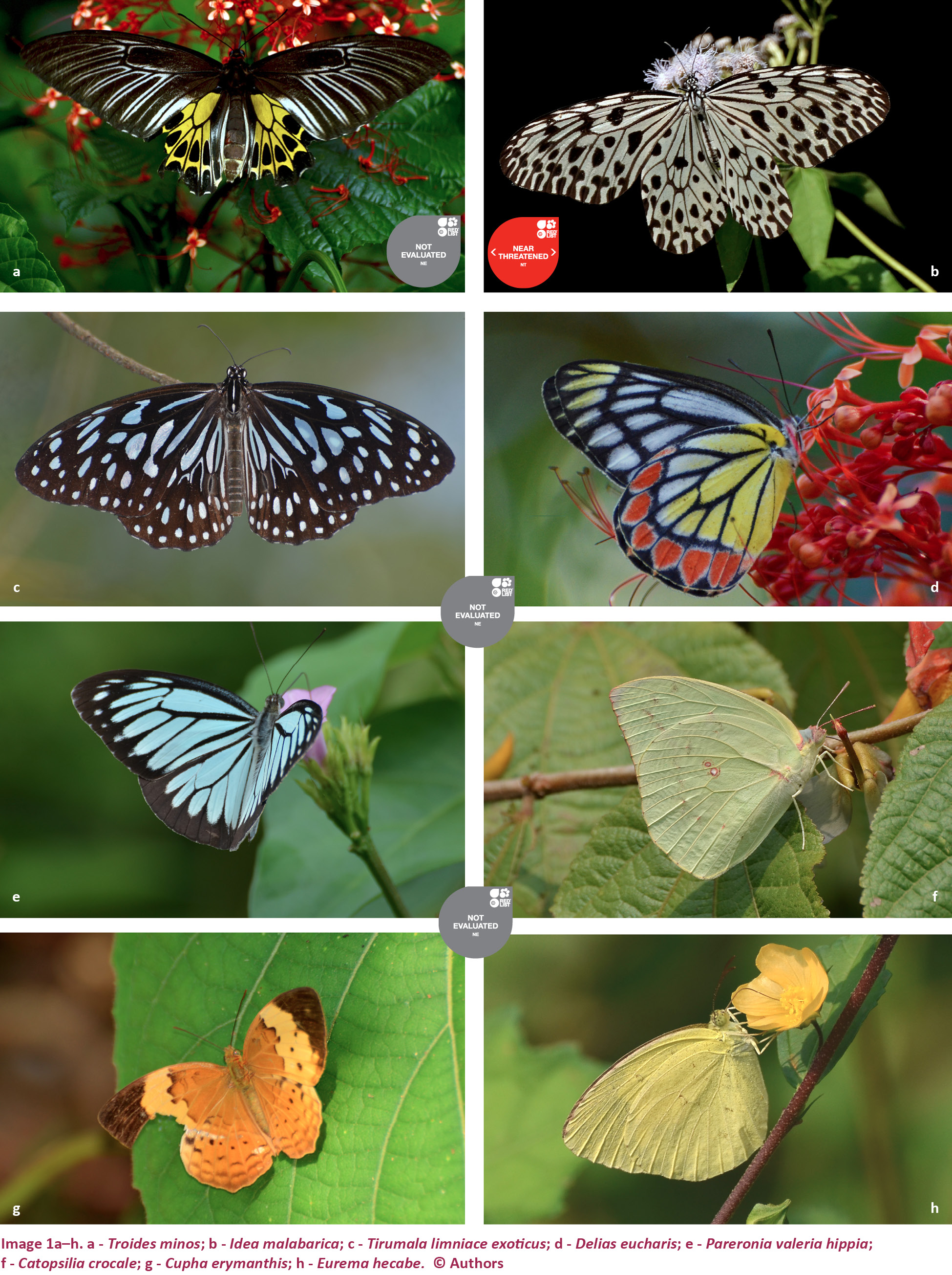 view of the butterfly insecta lepidoptera diversity of four