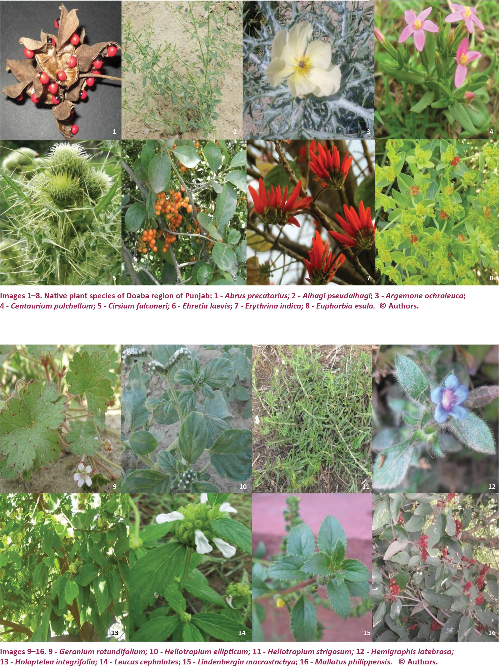 View of Angiosperm diversity in Doaba region of Punjab