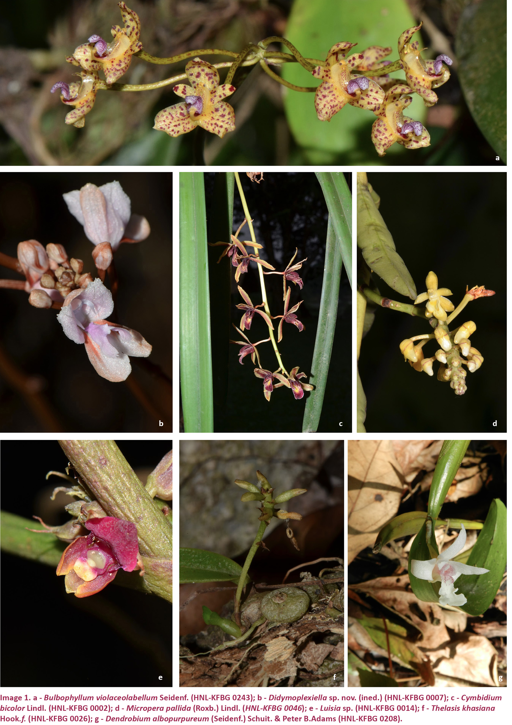 View Of Identifying Orchid Hotspots For Biodiversity Conservation In
