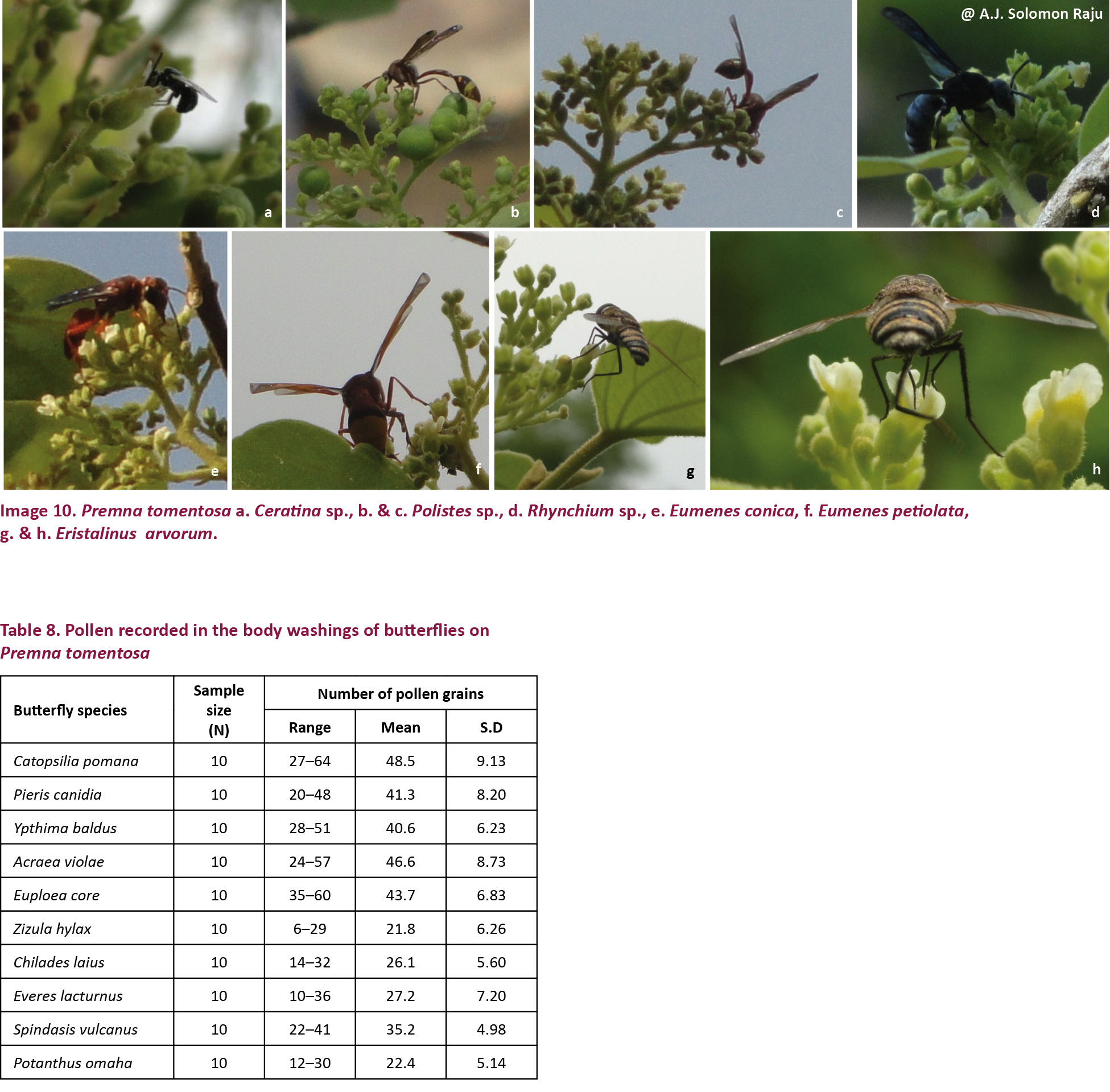 View of On the reproductive ecology of Premna latifolia L